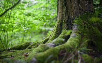 A photo of a forest showing nature. Justine Gonshaw's products are naturally sourced.